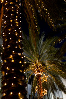 lighted palms2